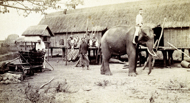 """""""Mon éléphant et son cornac"""" - Reportage de Yersin chez les Moïs"""