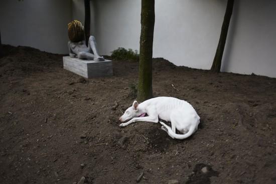 Pierre Huyghe, Untitled, 2011-2012. Fot. Ola Rindal / materiały prasowe