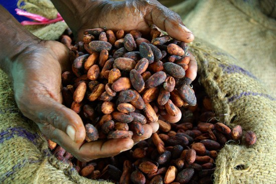 Cocoa_farmer_David_Kebu_Jnr_holding_the_finished_product,_dried_cocoa_beans_ready_for_export__(10687070725)