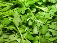 1280px-A_scene_of_Coriander_leaves