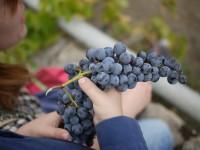 grapes-322705_1280