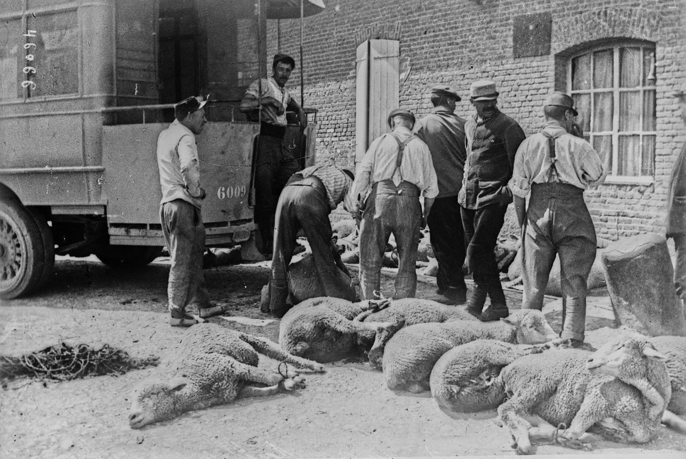 Furgonetka służąca do zaopatrywania wojska w świeże mięso. Fot. Agence Rol. Źródło: Bibliothèque nationale de France