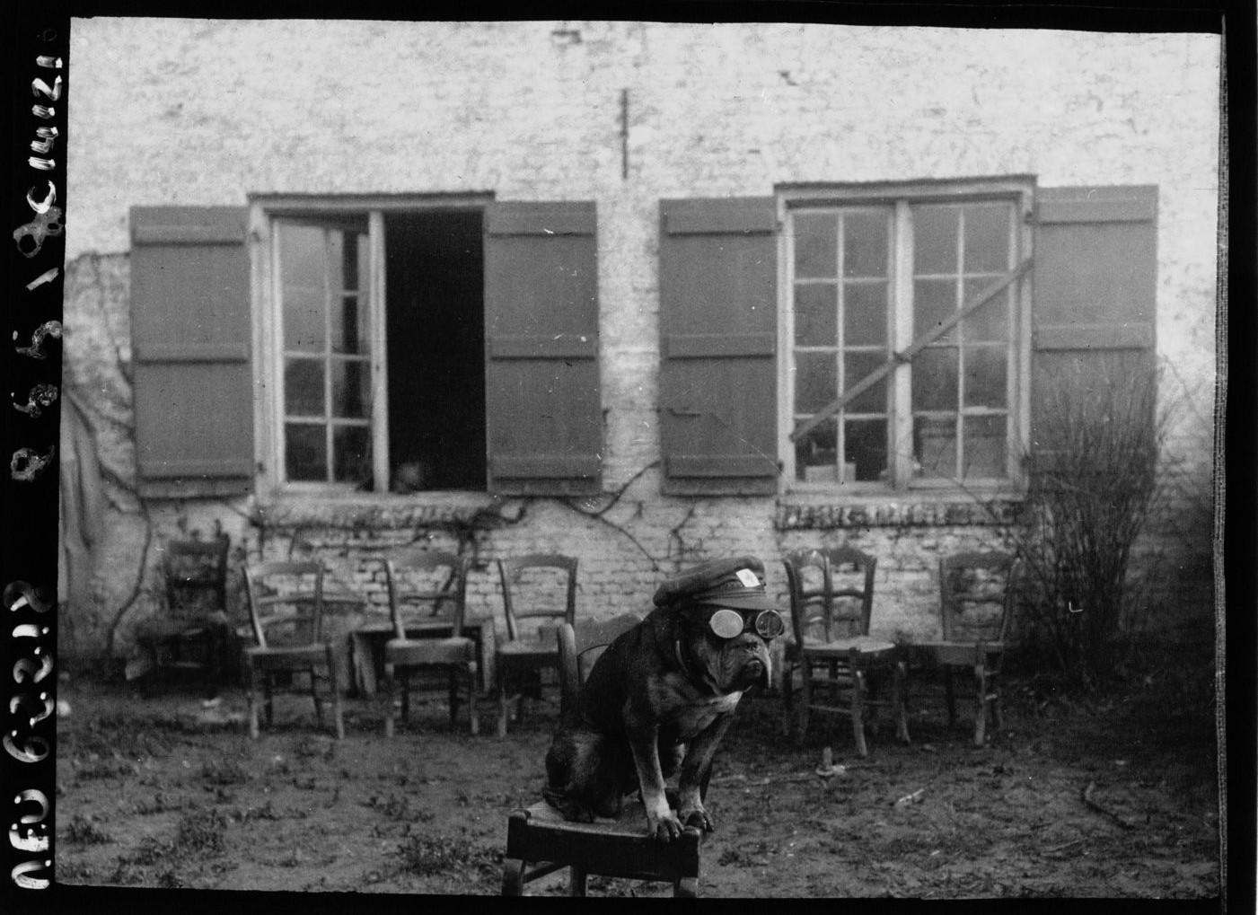 Buldożek - maskotka angielskiej sekcji sanitarnej. Fot. Agence Meurisse. Źródło: Bibliothèque nationale de France
