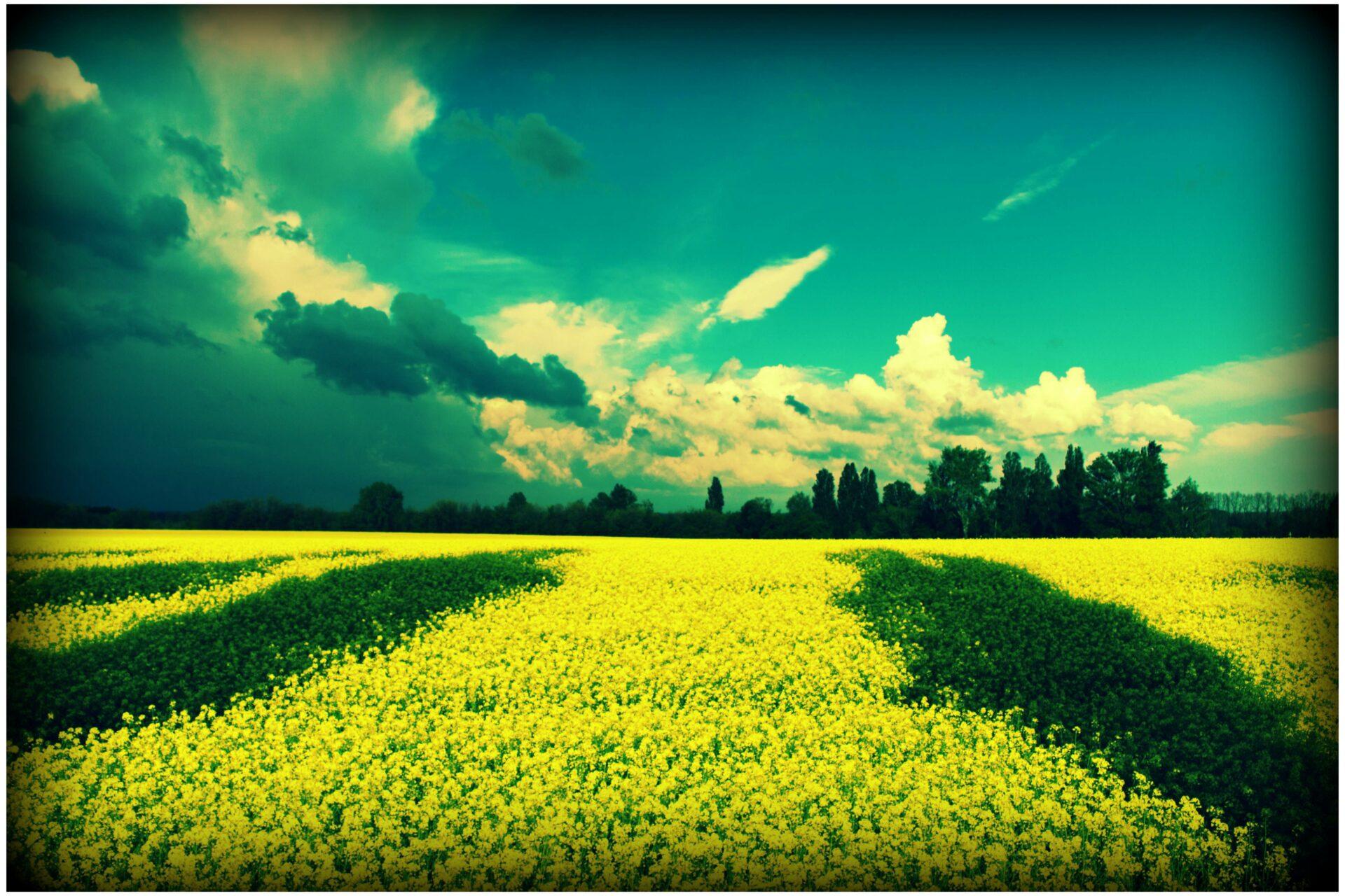 Fot. Konstantin Stupak Źródło: Goodfreephotos.com [CC0]